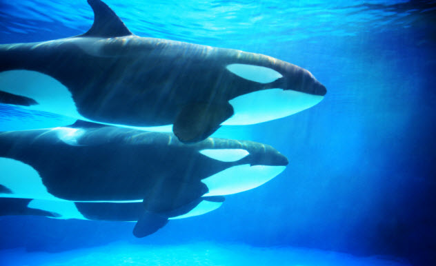 6-whales-underwater_000006590730_Small